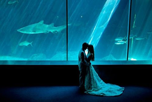 mariage-hiver-aquarium